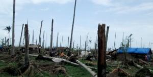 Hama-pohon-kelapa