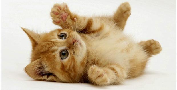 Manfaat-Pelihara-Kucing